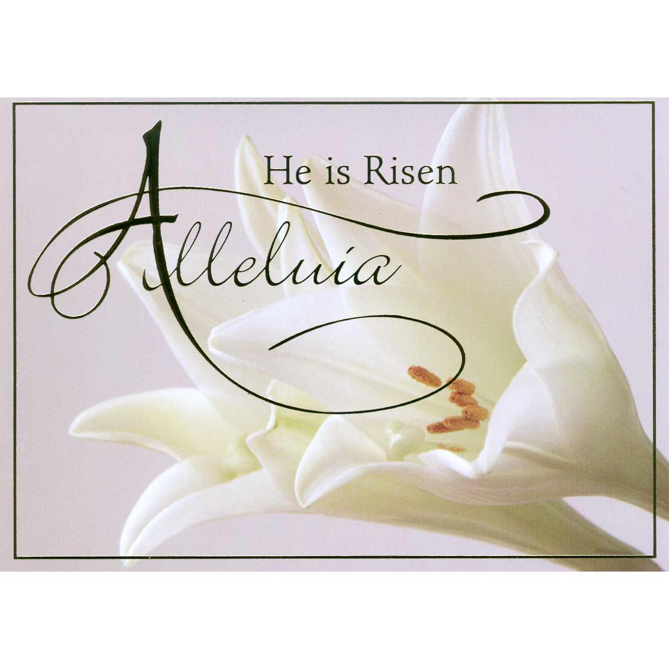 Alleluia Easter Boxed Cards 25box St Andrews Book Gift